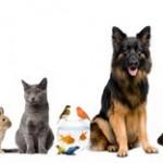Generelles Verbot der Tierhaltung unzulässig