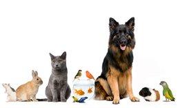 Zulässigkeit der Tierhaltung in Mietwohnungen
